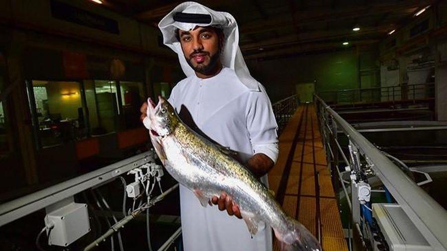 Độc đáo mô hình nuôi cá hồi Đại Tây Dương trên sa mạc ở UAE