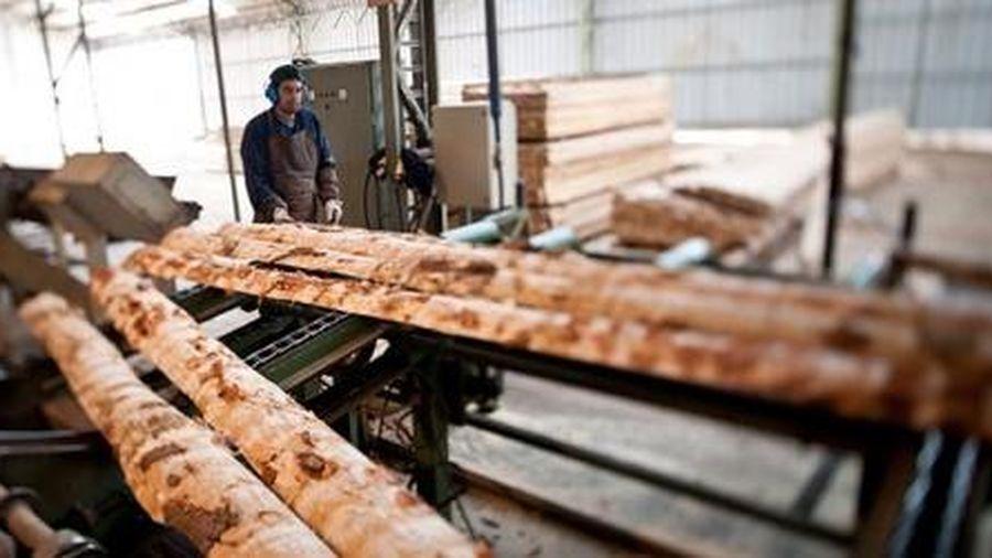 Chi-lê xúc tiến nguồn cung gỗ nguyên liệu mới cho doanh nghiệp Việt Nam