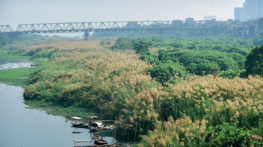 Lạc vào cánh đồng cỏ lau đẹp như xứ sở thần tiên dưới chân cầu Long Biên