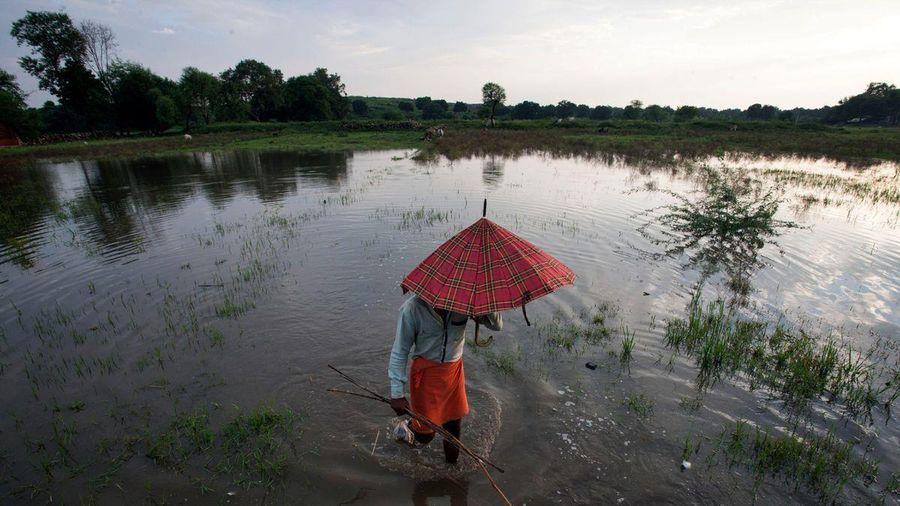 Con người thất bại trước tự nhiên, kinh tế Ấn Độ lao đao