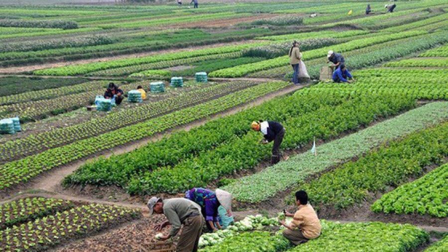 Chuyển quyền sử dụng đất nông nghiệp vượt hạn mức quy định sẽ bị phạt đến 50 triệu đồng