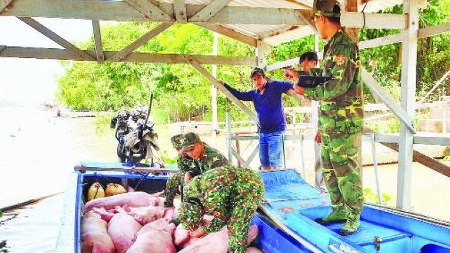 Ngăn chặn nhập lậu lợn qua biên giới An Giang