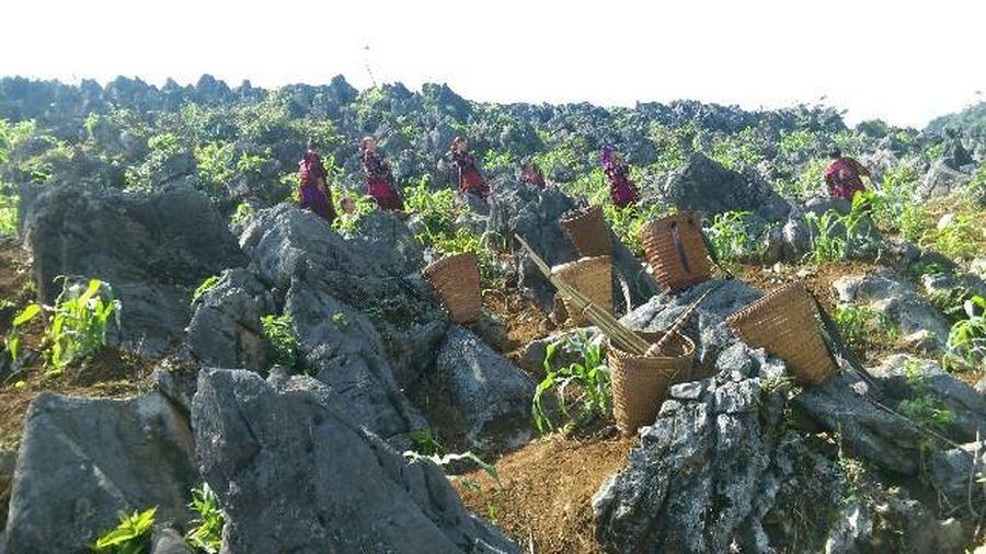 Điện Biên: Khai thác tài nguyên 'chóng mặt', sinh kế của đồng bào Mông bị đe dọa