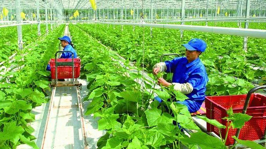 Chính sách khuyến khích đầu tư vào nông nghiệp, nông thôn: Loại quả đẹp nhưng không ăn được!