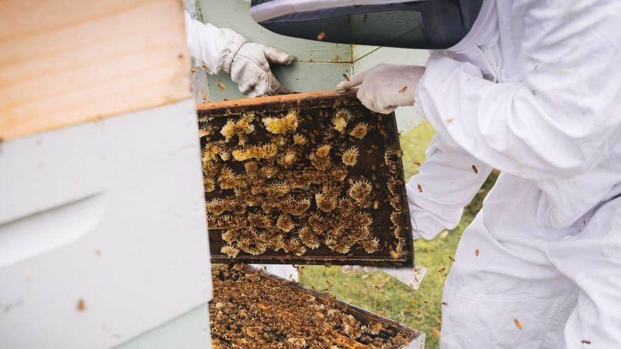 Đắt như vàng lỏng, lọ mật ong trị giá 40 triệu đồng