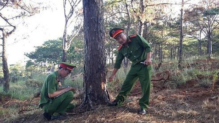2 Phó bí thư Tỉnh ủy Đắk Nông trực tiếp chỉ đạo dẹp nạn phá rừng thông