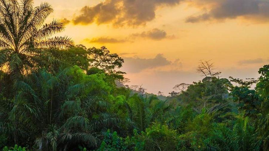 1/3 hệ thực vật của châu Phi nhiệt đới trên đà tuyệt chủng