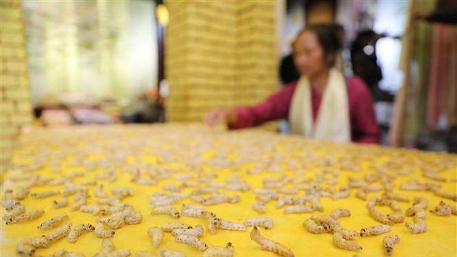 Hà Nội: Trải nghiệm nghệ thuật với chuỗi sự kiện văn hóa 'Tiếng tơ'