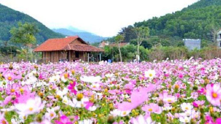 Quảng Ninh: Hiệu quả từ HTX du lịch-nông nghiệp sinh thái