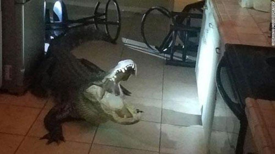 Cá sấu phá nát cửa kính, chui vào nhà dân làm náo loạn