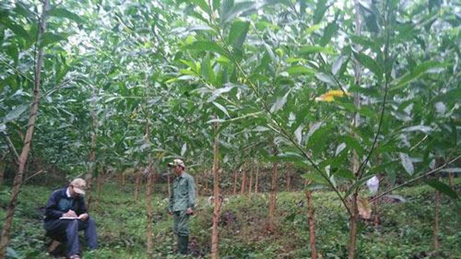 Vĩnh Phúc: HTX Thanh Giang phát triển bền vững nhờ bảo vệ môi trường