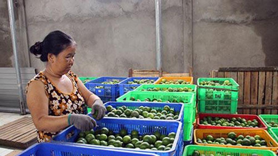 Hậu Giang: Thành công nhờ làm nông thông minh