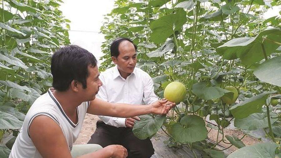 Huyện Ứng Hòa đột phá trong sản xuất nông nghiệp
