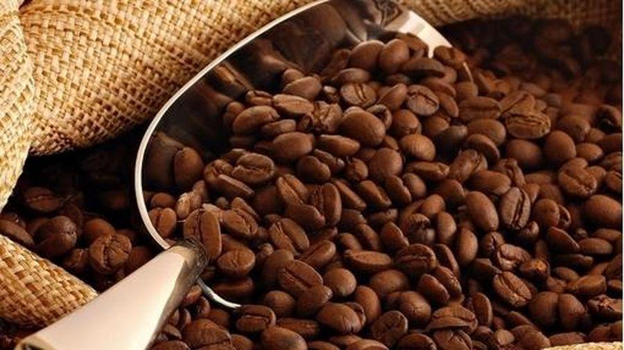Giá cà phê hôm nay 23/11: Giảm nhẹ 100 đồng/kg