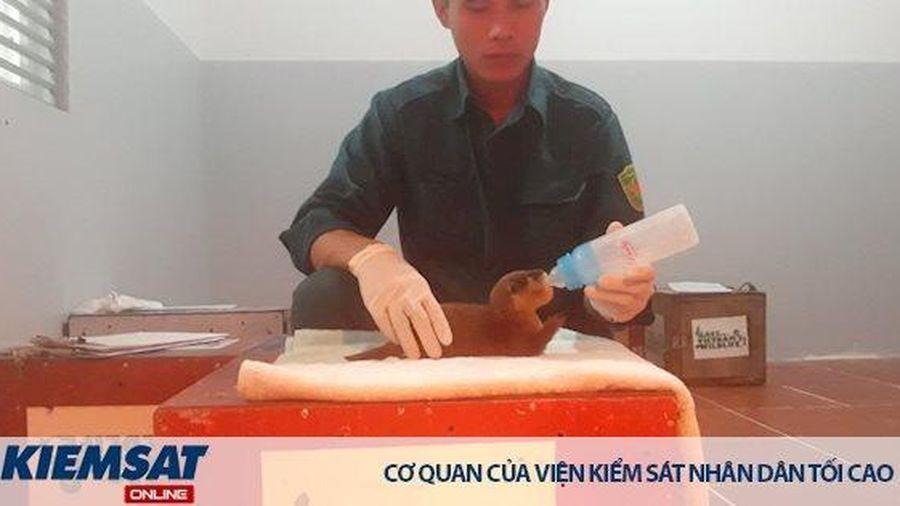 Cứu hộ thành công 15 rái cá vuốt bé cực kỳ nguy cấp