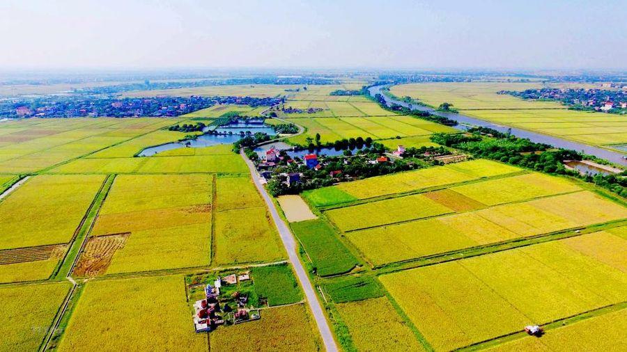 Đề xuất miễn thuế sử dụng đất nông nghiệp đến hết năm 2030