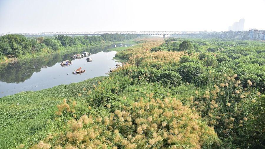 Hà Nội chớm đông: Ngất ngây cánh đồng cỏ lau ven sông Hồng đẹp như phim