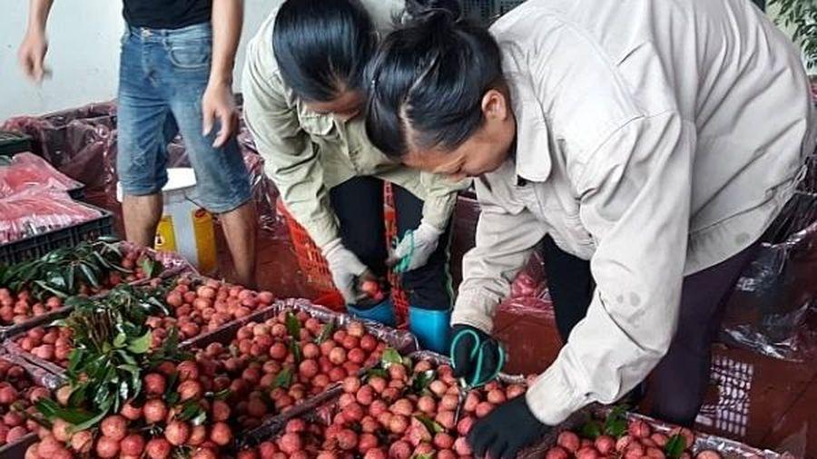 Vô số bất cập logistics 'cản chân' nông sản Việt