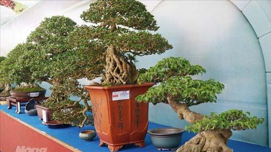 Cả ngàn 'người mẫu' chân dài chân ngắn bonsai đang khoe sắc ở Sài Gòn