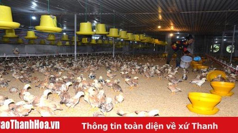 Xã Tuy Lộc phát triển sản xuất gắn với xây dựng nông thôn mới