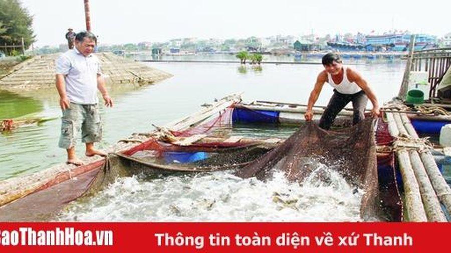 Phát triển nghề nuôi cá biển có giá trị kinh tế cao