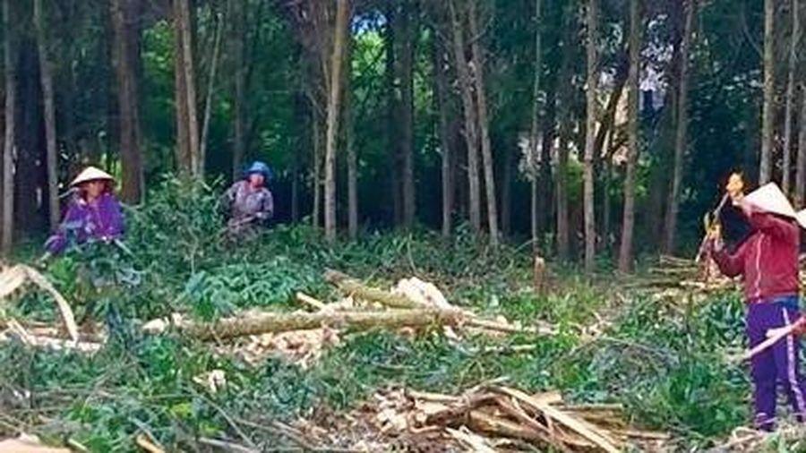 Nam thanh niên đi khai thác gỗ bị cây đè tử vong