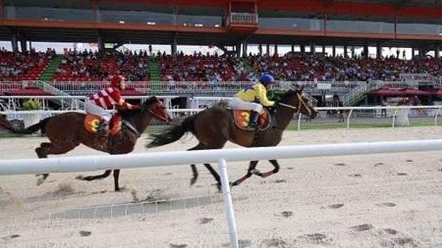 Đà Nẵng sẽ xây trường đua ngựa để thu hút khách du lịch