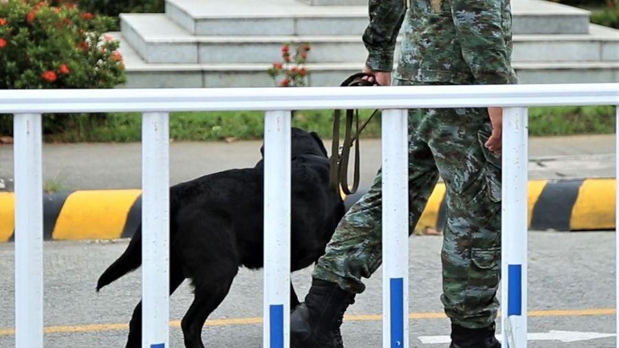 Chó nghiệp vụ được sử dụng ở trận U22 Việt Nam gặp Brunei