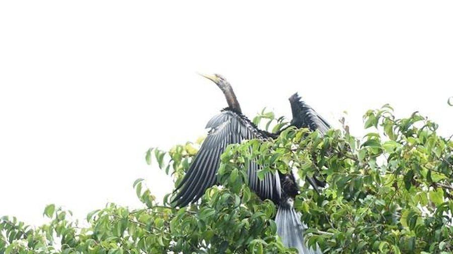 Phối hợp bảo vệ đàn chim cổ rắn quý hiếm ở Đồng Nai