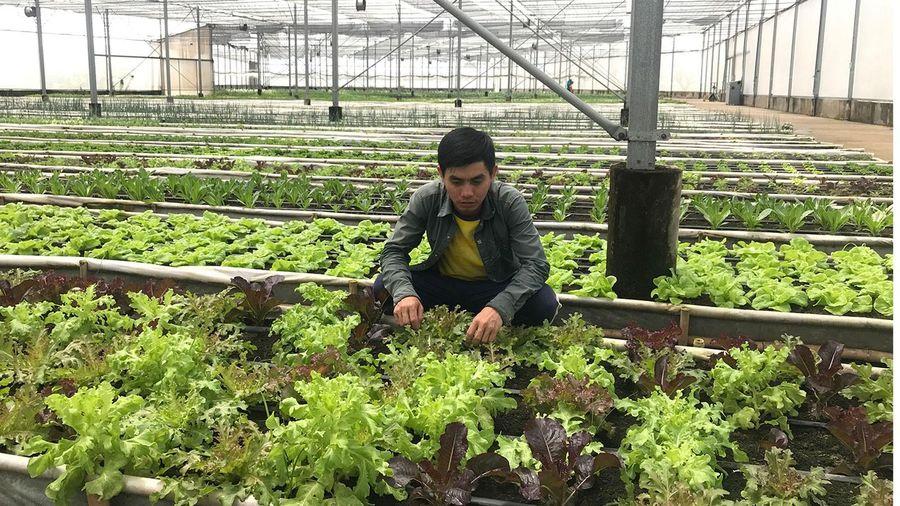 Xử lý hình sự vi phạm an toàn nông sản