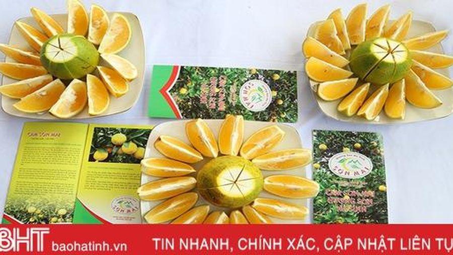 Hành trình đưa sản vật 'Cam Sơn Mai' đạt văn bằng bảo hộ nhãn hiệu