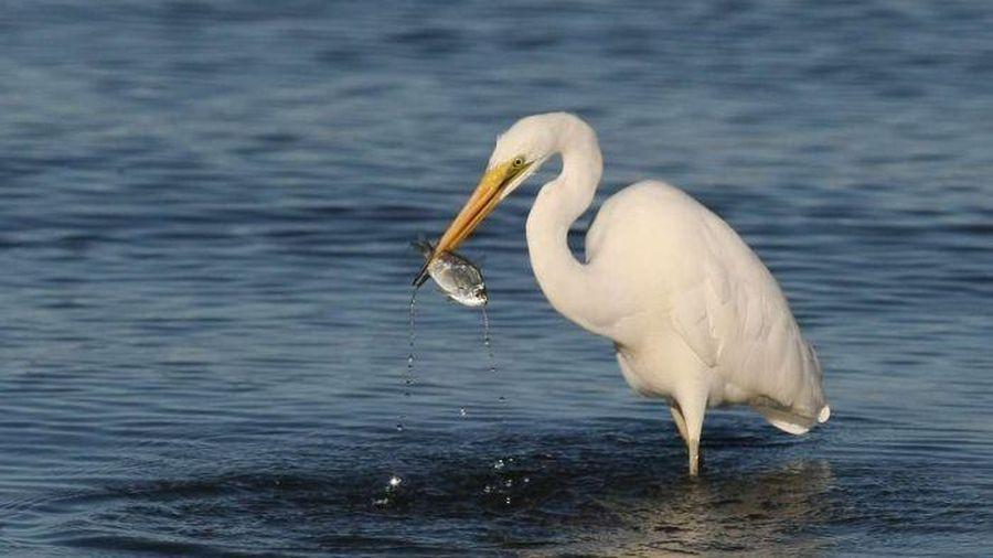 Giới khoa học cảnh báo hậu quả của thuốc tân dược đối với môi trường nước