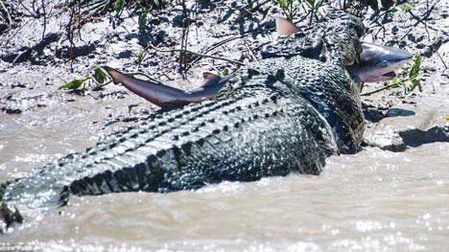 Cá sấu khổng lồ tử chiến để trả thù cá mập