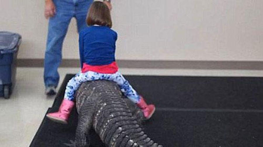 Hãi hùng trò chơi nguy hiểm nhất thế giới: Bé gái cưỡi cá sấu trong ngày sinh nhật