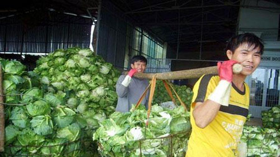 Lâm Đồng: triển sản xuất nông nghiệp công nghệ cao gắn với liên kết theo chuỗi giá trị
