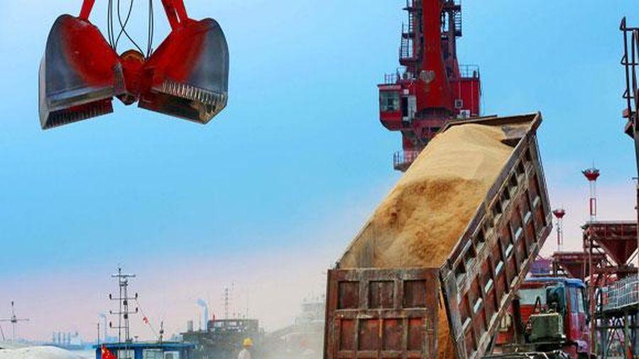 Bắc Kinh đẩy mạnh mua đậu nành Brazil trước lo ngại thỏa thuận thương mại Mỹ - Trung bị hoãn