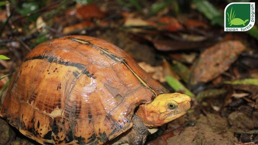 Quy trình nghiêm ngặt thả 47 rùa quý về tự nhiên