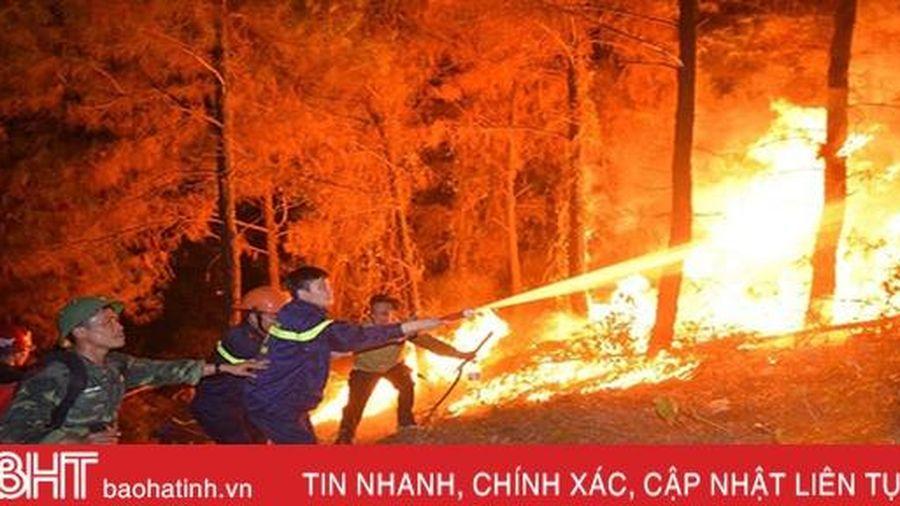 Đề xuất trồng mới 51,2 ha sau vụ cháy rừng chưa từng có ở Hà Tĩnh