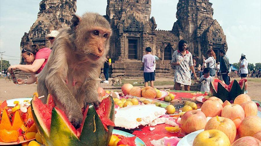 Người Thái Lan bày 'tiệc bufftet' trái cây cho bầy khỉ hoang