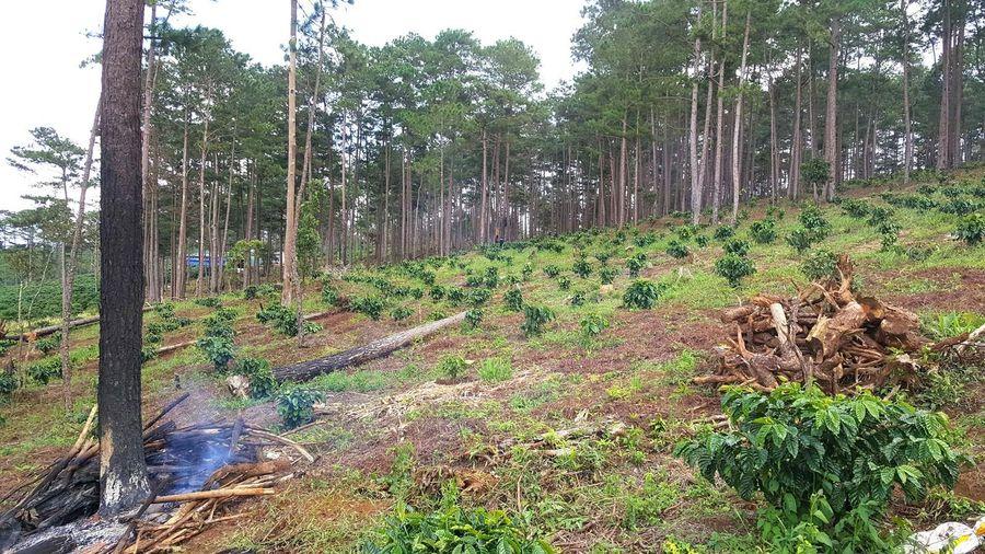 Bất cập trong giao rừng cho cộng đồng