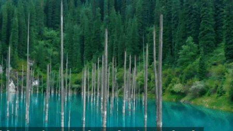 Lạc vào thế giới có rừng cây 'mọc ngược' dưới lòng hồ nước