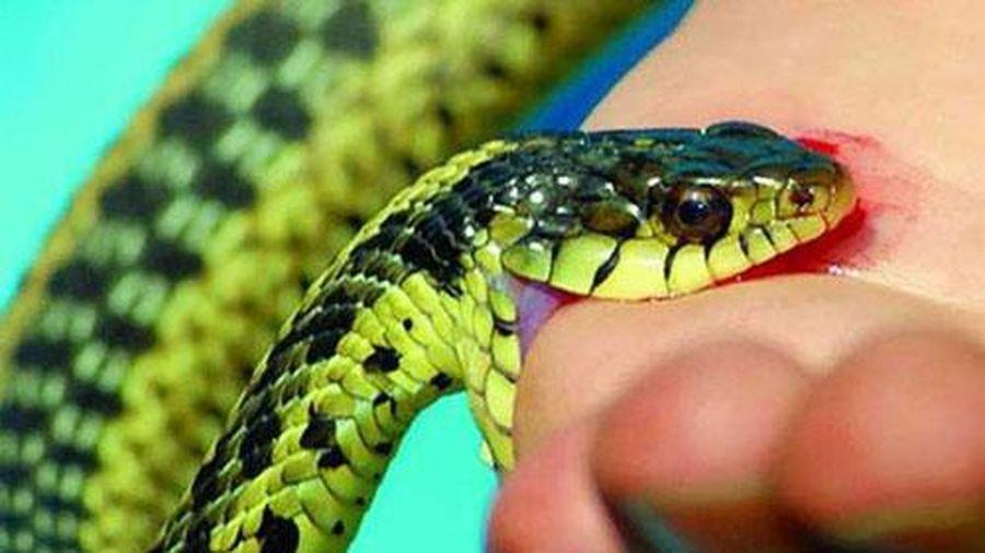 Mẹ bị rắn độc cắn nhưng vẫn cho con gái 3 tháng tuổi bú dẫn đến cái kết thảm thương