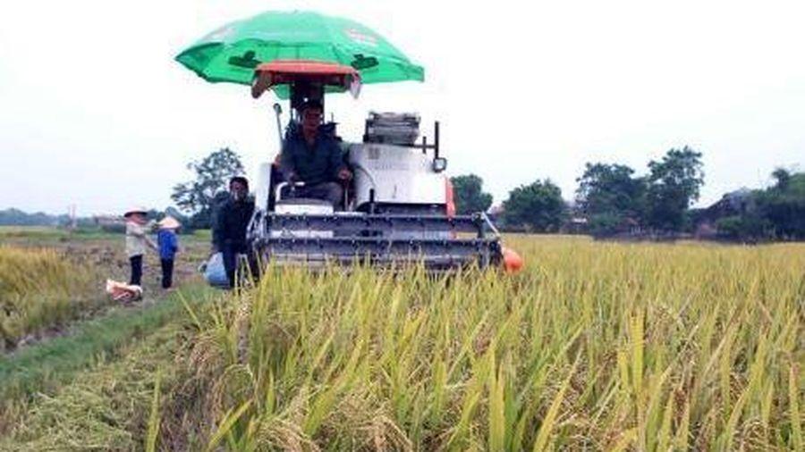 Cà Mau tái cơ cấu nông nghiệp - Bài cuối: Tập trung vào ngành hàng chủ lực