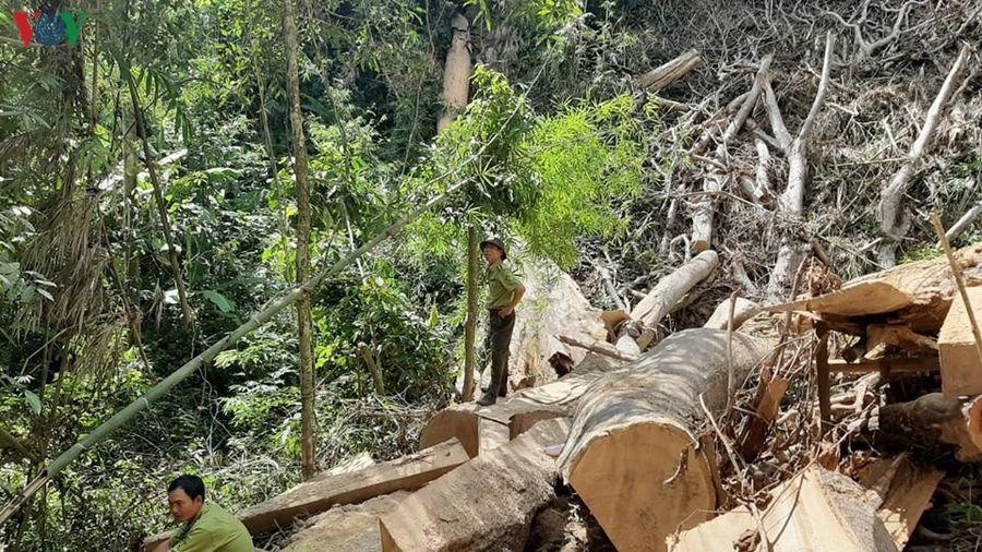 Rừng bị tàn phá ở Khu bảo tồn thiên nhiên Nam Kar là rất nghiêm trọng