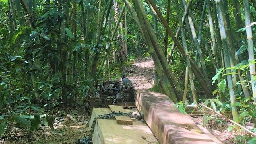Bạt ngàn gỗ quý trăm tuổi ở Đắk Lắk bị tàn phá không thương tiếc