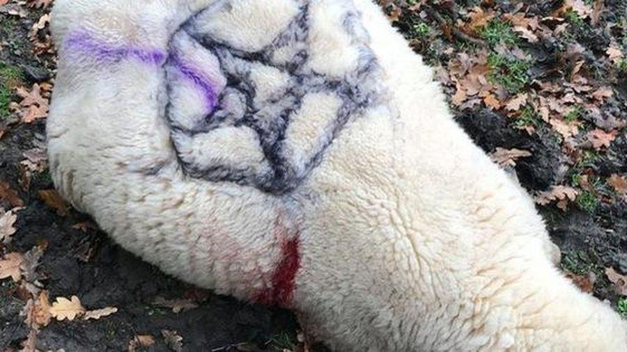 Rợn người với hình ảnh động vật bị tàn sát và đánh dấu ngôi sao 5 cánh bởi những kẻ thờ quỷ Satan trong khu rừng hắc ám