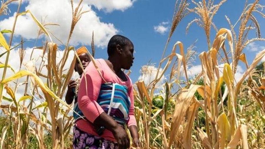 Siêu lạm phát 490%, Zimbabwe đối mặt nạn đói nghiêm trọng