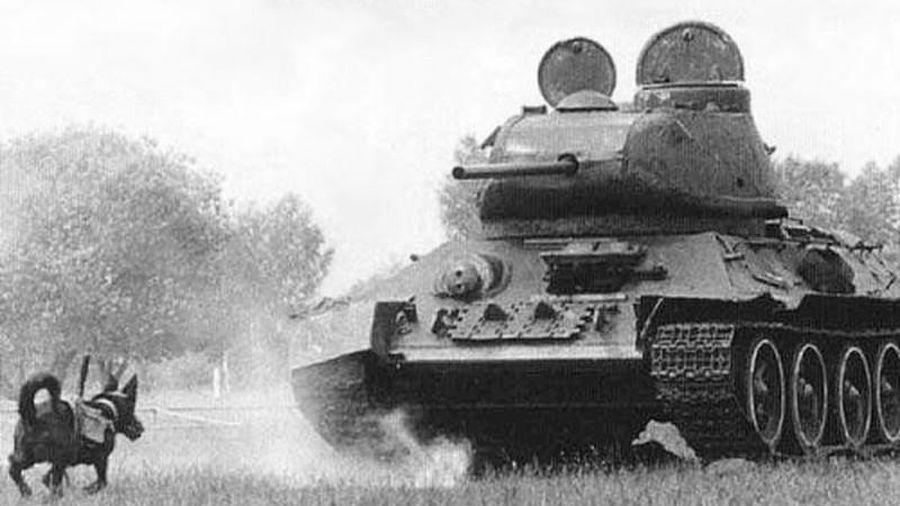 Bất ngờ vũ khí đặc biệt của Liên Xô trong Thế chiến 2