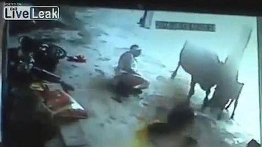Thót tim trước cảnh bò tấn công 'kẻ giết người' cứu cô gái