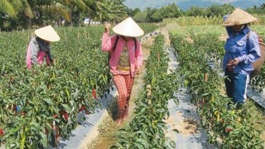 Đào tạo nghề cho lao động nông thôn trong kỷ nguyên 4.0